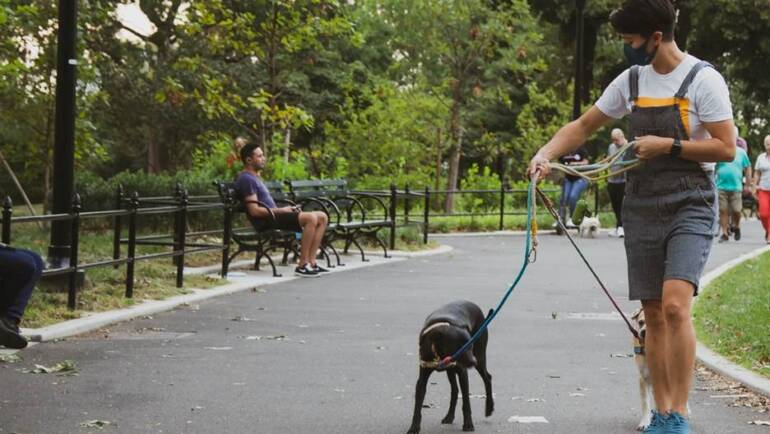 Do I Need a Dog Walker? How to Find & Choose One