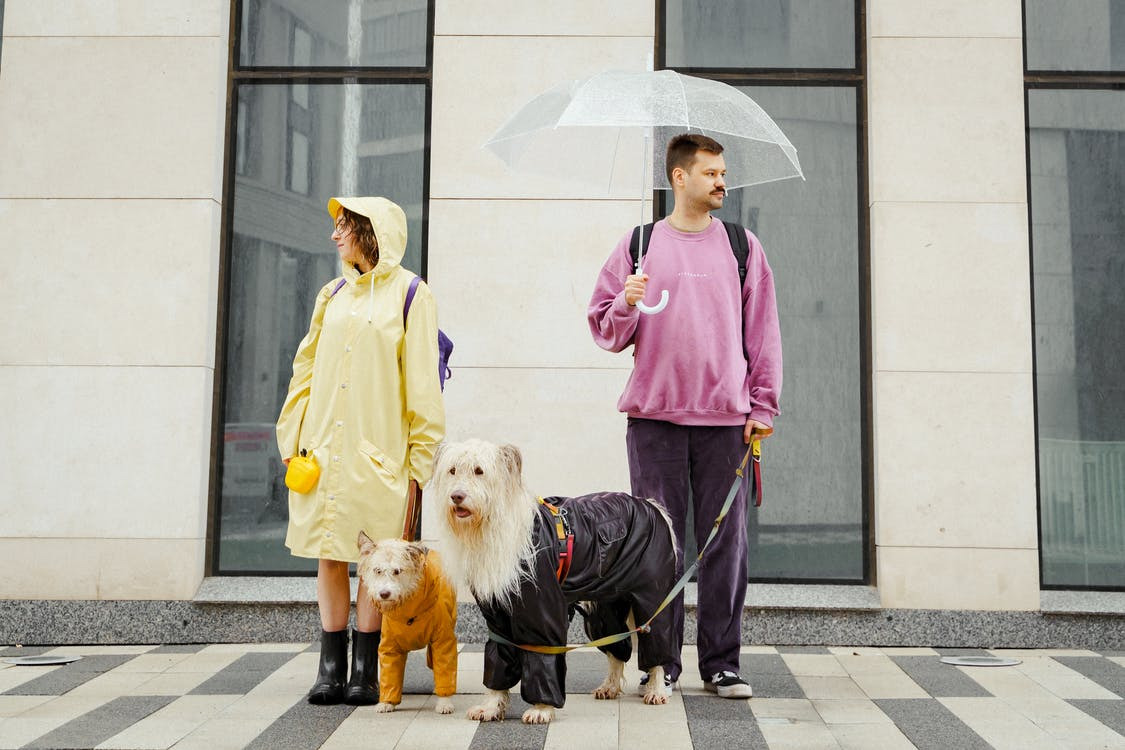 two people walking their dogs with an umbrella and coats.
