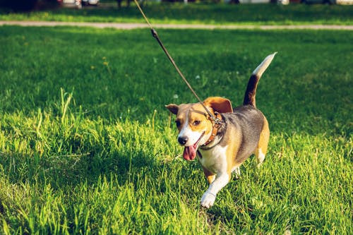 Here's Why Your Dog Needs Regular Exercise